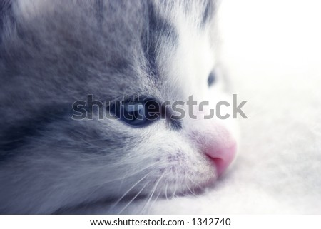 Kitten sleeping on a white blanket