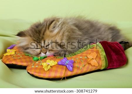 Kitten sleeping on colourful slippers on green background  - stock photo