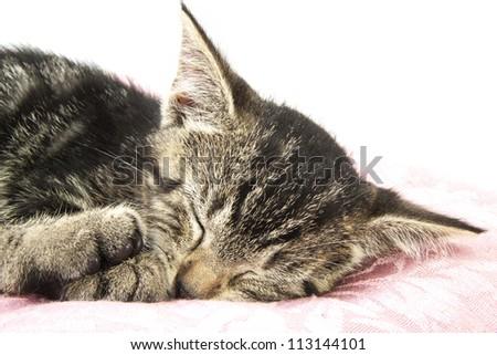 Kitten sleeping on pillow closeup for background use - stock photo