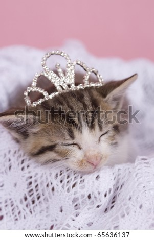 kitten sleeping with princess crown - stock photo
