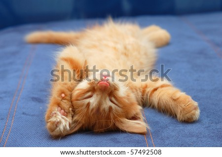 kitten sleeps on the back like a log - stock photo