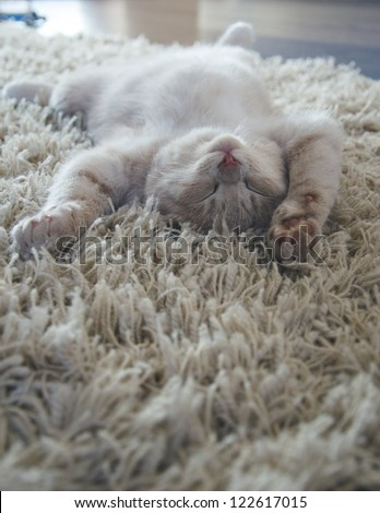 kitten sleeps on the back like a log on carpet - stock photo