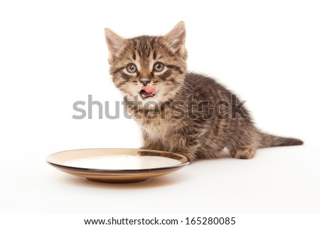 Kitten smack one's lips with sour cream on white - stock photo