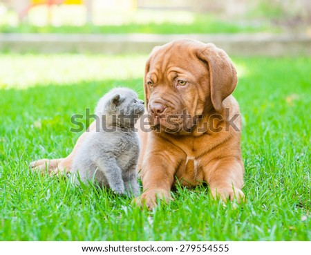 kitten sniffing puppy on the green grass - stock photo