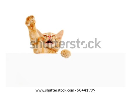 kitten speaker holding blank banner isolated on white background - stock photo