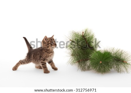 Kitten standing near the pine tree branch - stock photo