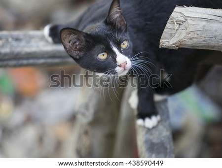 Kitten, The black cat sat on wood watching something on blur background, cute funny cat close up, young playful cat at home, domestic cat, relaxing cat, cat resting, cat playing at home, elegant cat - stock photo