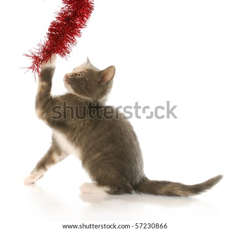 kitten tugging on christmas garland with reflection on white background