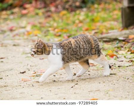 Kitten walk - stock photo