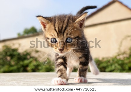 kitten walking on the street