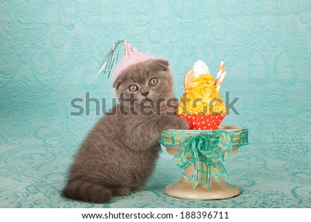 Kitten wearing pink birthday hat with orange cupcake on large cupcake stand on blue background fabric\ - stock photo