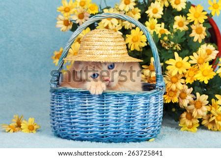 Kitten wearing straw hat relaxing in the basket near flowers - stock photo