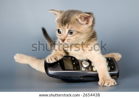 Kitten whom the first time poses in studio - stock photo