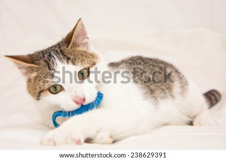 Kitten with a blue toy mouse in the mouth laying on the bed and cleaning himself - stock photo