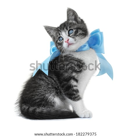 Kitten with a bow isolated on white background - stock photo