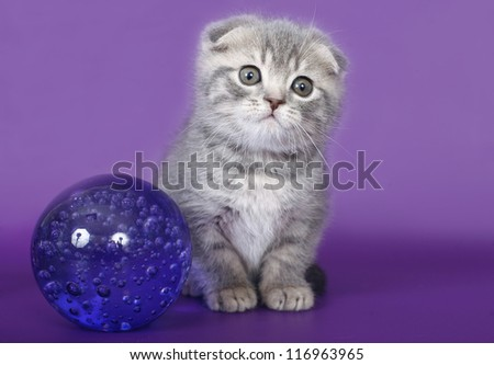 Kitten with a glass ball.