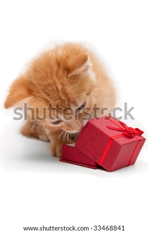 kitten with a red gift box