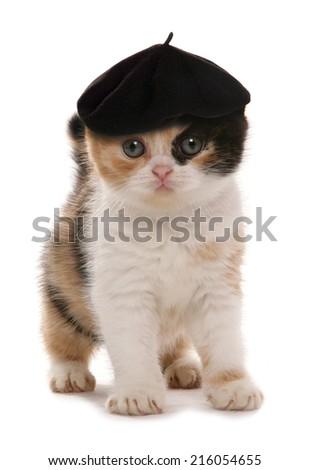 kitten with artist beret hat - stock photo