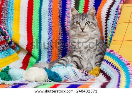 Kitten with balls of yarn on multicolored  woven blanket - stock photo