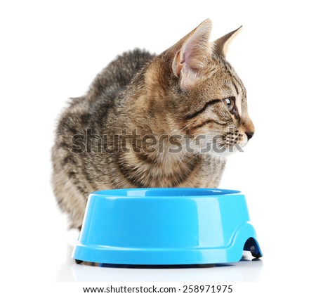 Kitten with blue bowl of food isolated on white - stock photo