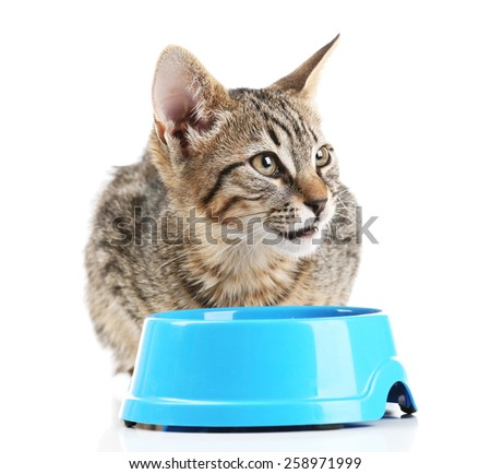 Kitten with blue bowl of food isolated on white