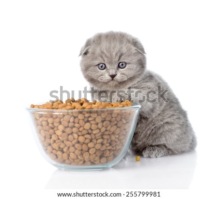 kitten with bowl of dry cat food. isolated on white background