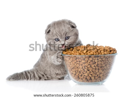 kitten with bowl of dry cat food. isolated on white background - stock photo