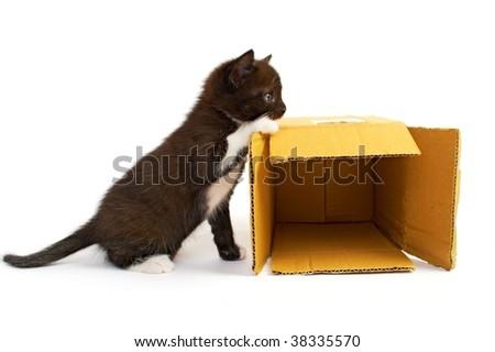 kitten with box on white background - stock photo