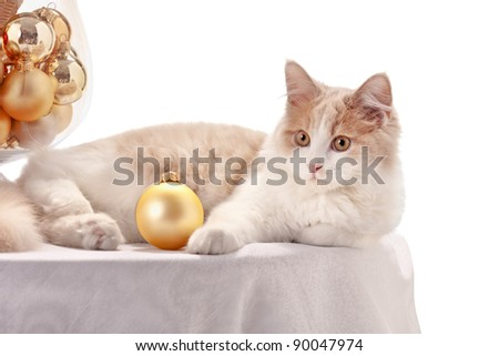 Kitten with Christmas Decorations
