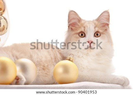 Kitten with Christmas Decorations - stock photo