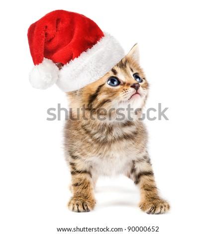 Kitten with christmas santa cap. - stock photo