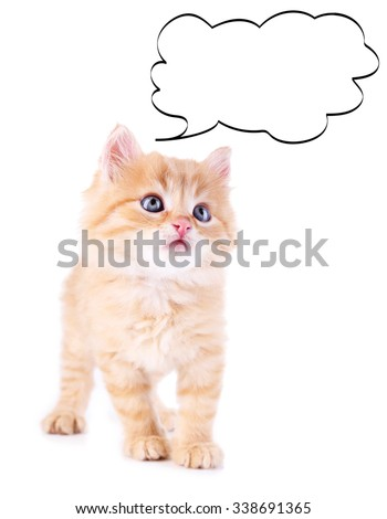 Kitten with empty cloud bubble above her head, isolated on white - stock photo