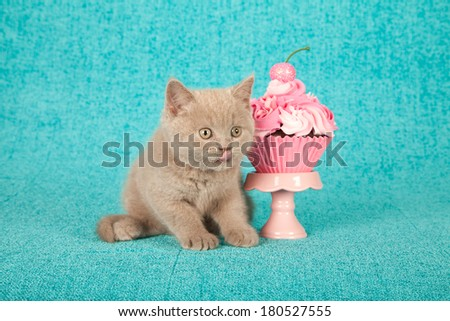 Kitten with faux cupcake on cupcake stand against bright blue background - stock photo