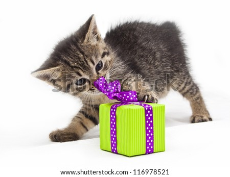 kitten with green present - stock photo