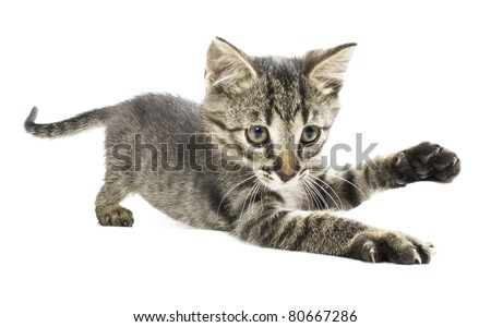 Kitten with his paw up isolated on white background - stock photo