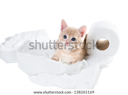 Kitten with innocent eyes and unwound toilet paper. I have nothing to do with! - stock photo
