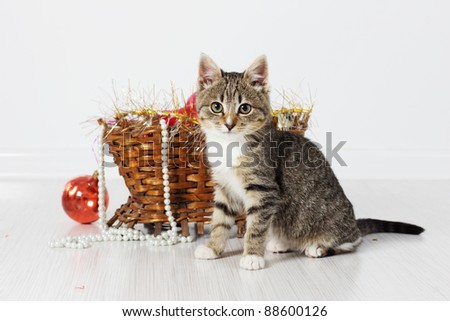 Kitten with New Year's basket - stock photo