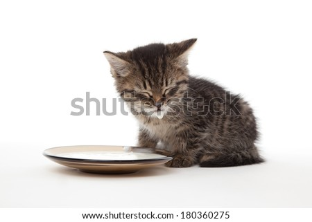 Kitten with sour cream on his lips and plate - stock photo