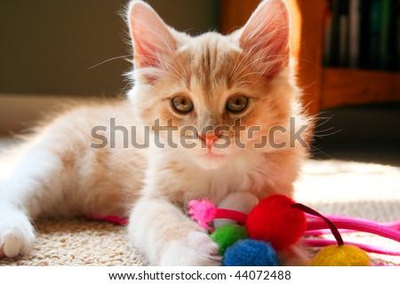 Kitten with Toys - stock photo