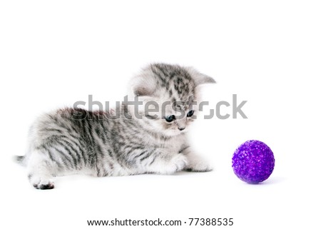 Kitten with violet ball - stock photo
