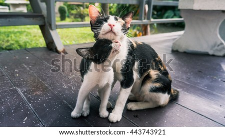 Kittens and mother cat lovely - stock photo