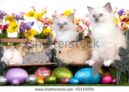 Kittens, bunnies, rabbits, chicks and ducklings with easter eggs, picket fence, flowers and lawn - stock photo