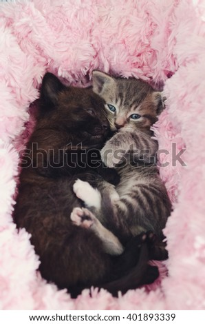kittens cuddling together - stock photo