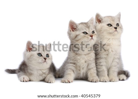 Kittens family - stock photo