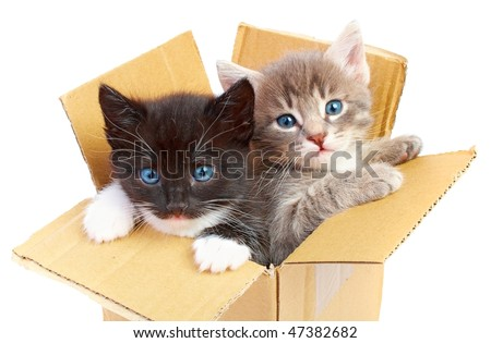 kittens in box isolated on white background - stock photo