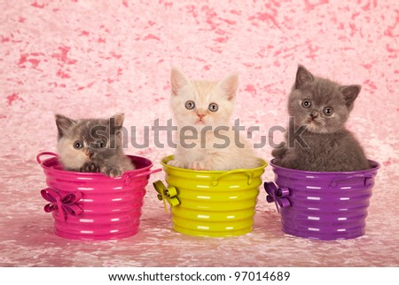 Kittens in colorful buckets pails on pink background - stock photo