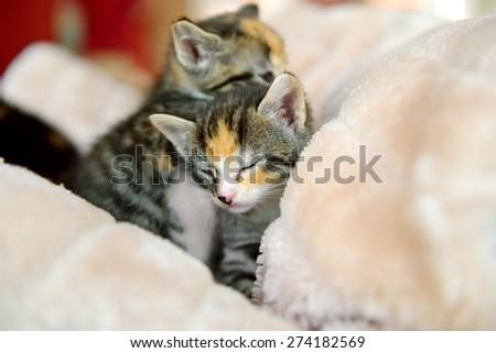 Kittens in towel sleeping - stock photo