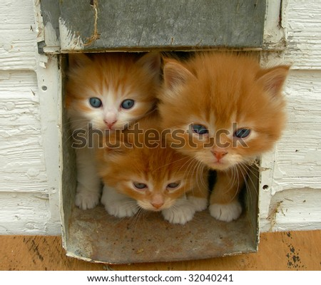 Kittens looking out of their house - stock photo