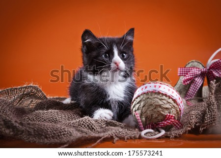 Kittens on a colored background - stock photo