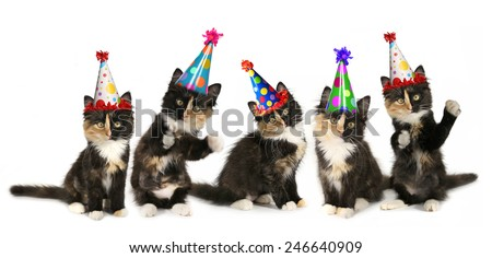 Kittens on a White Background With Birthday Hats - stock photo